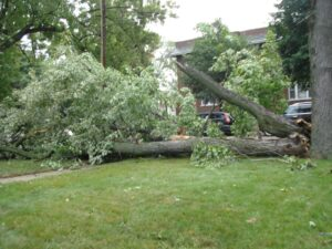 Tree Removal services maryland