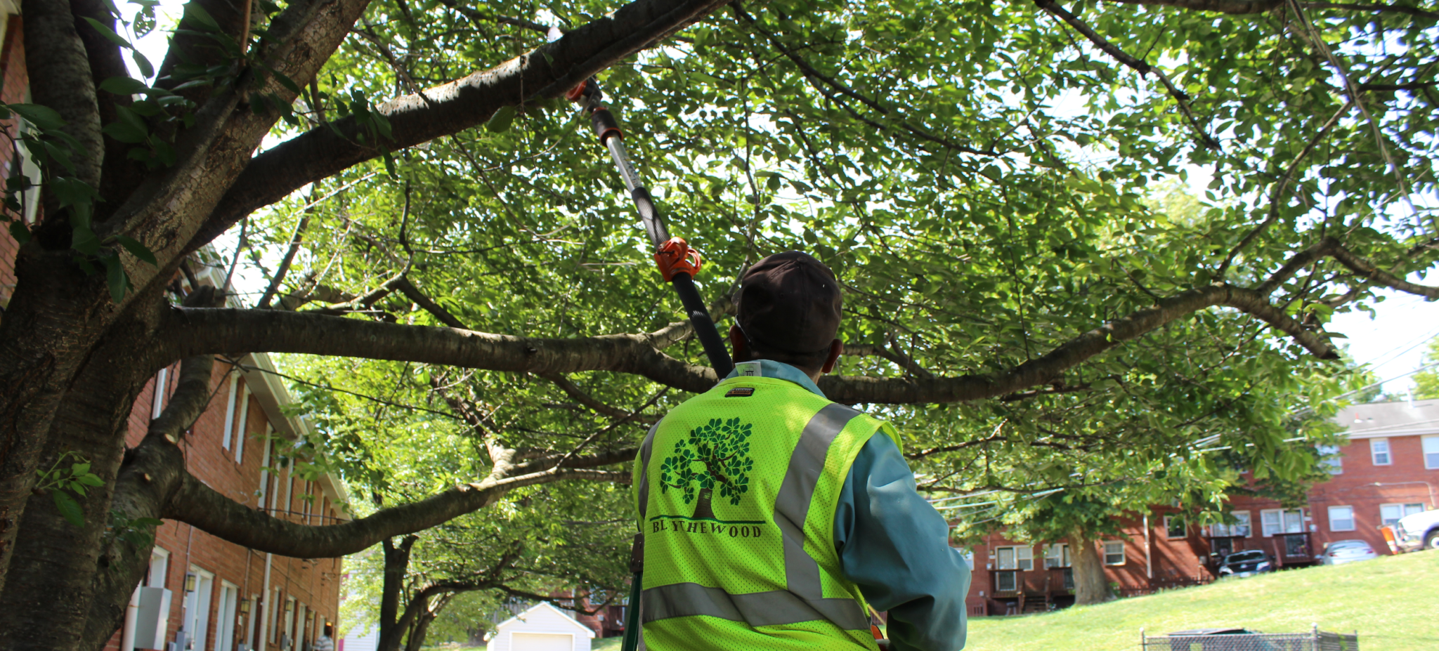 Pruning trees is important for safety by removing dead or overgrown branches and maintaing their shape.